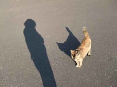 Img1444_cat_big.jpg