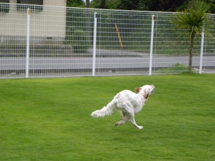Img144_dog_big.jpg