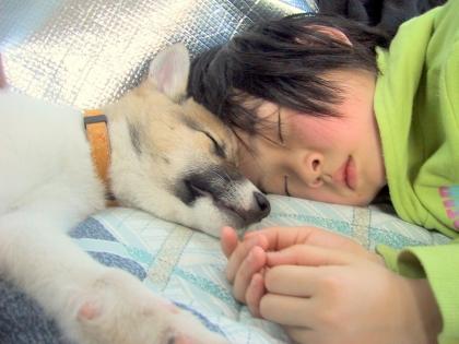 Img280_dog_big_20110913072651.jpg
