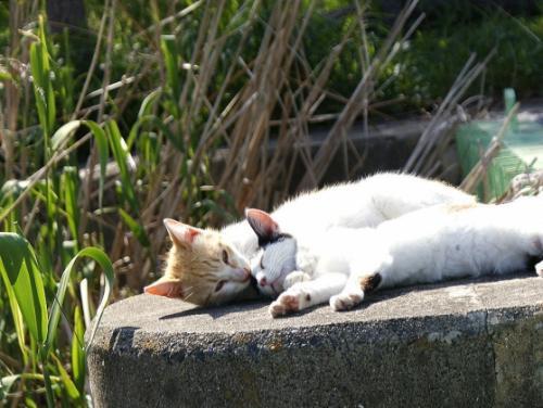 Img283_cat_big.jpg