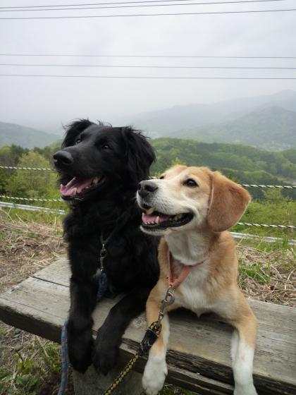 Img293_dog_big.jpg