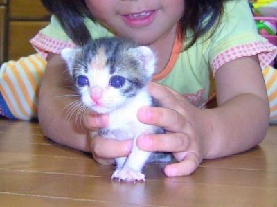 Img337_cat_big.jpg