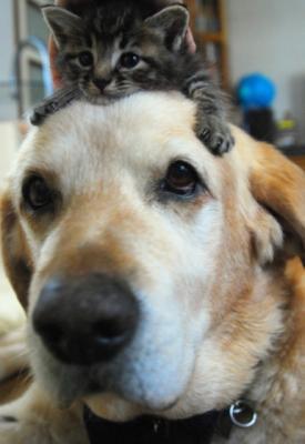 Img404_dog_big_20110913072325.jpg