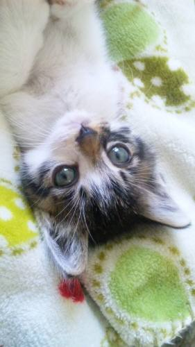 Img442_cat_big.jpg