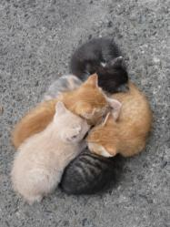Img494_cat_big.jpg