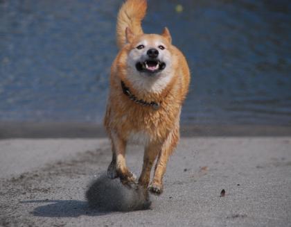 Img524_dog_big.jpg