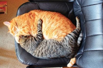 Img544_cat_big.jpg