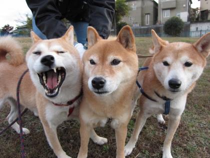 Img70_dog_big.jpg