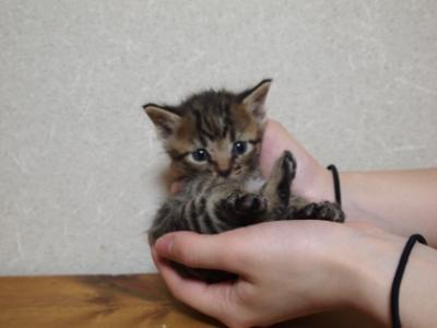 Img830_cat_big.jpg