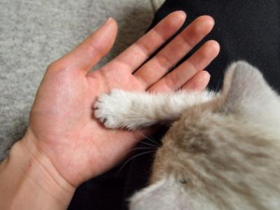 Img923_cat_big.jpg