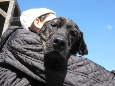 Img933_dog_big.jpg