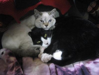 Img937_cat_big.jpg