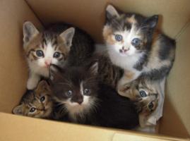 Img954_cat_big.jpg