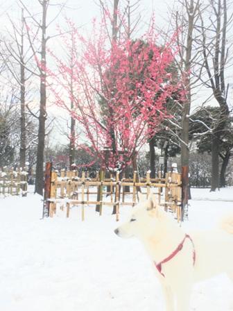 2.2朝の公園2