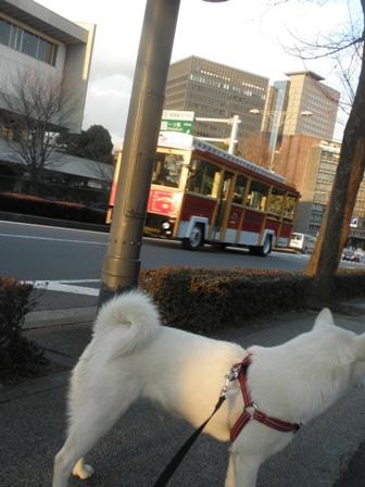 2.5面白いバス
