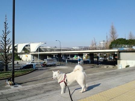 3.10駒沢公園4