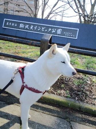 3.10駒沢公園1