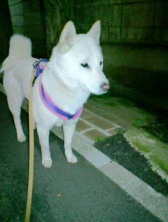 3.27夜の散歩
