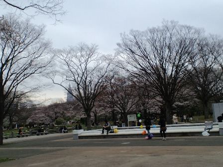 3.31代々木公園2