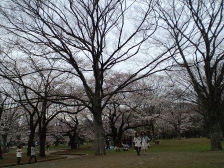 3.31代々木公園3