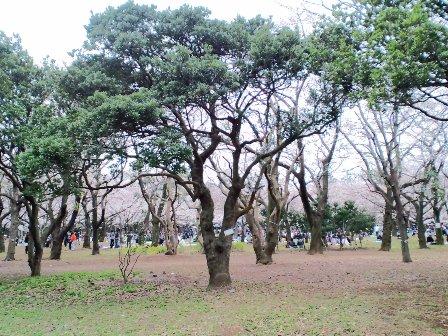 3.31代々木公園1