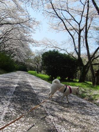 4.8秋ヶ瀬公園2