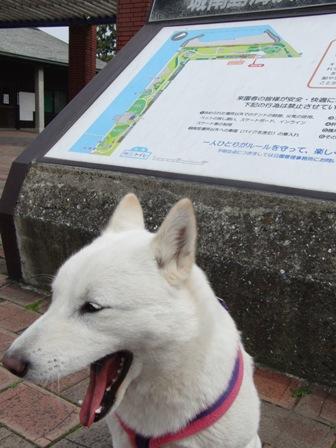 4.9城南島海浜公園 地図