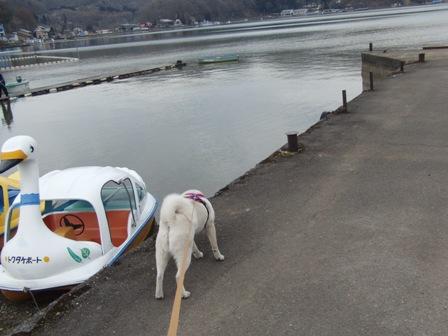 4.10野尻湖