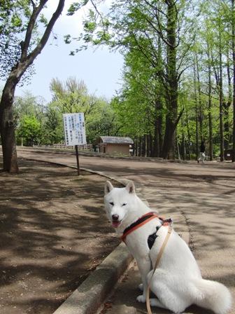 4.29公園