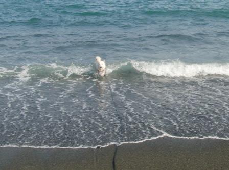 5.2御幸の浜3