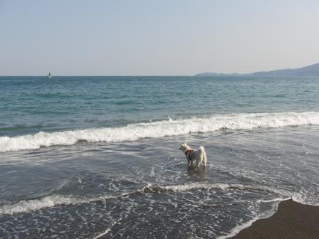5.2御幸の浜4