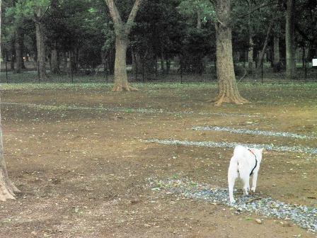 5.25代々木公園ドッグラン3