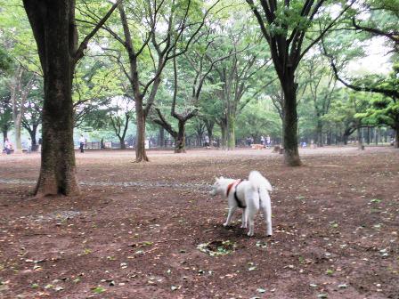 5.25代々木公園ドッグラン2