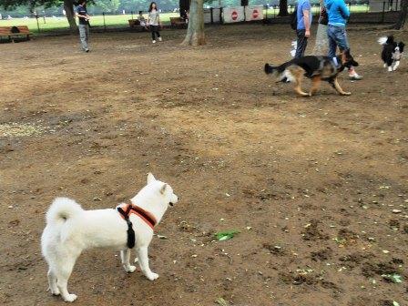 5.25代々木公園ドッグラン1