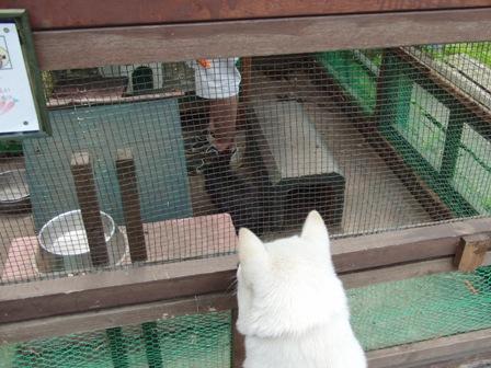 6.6ウサギ小屋