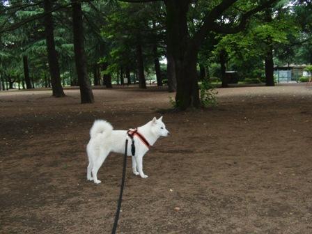 7.2野川公園