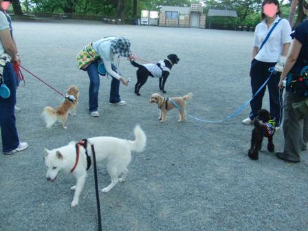 8.3お散歩トレーニング2