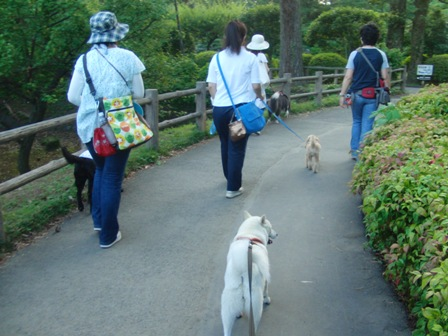 8.3お散歩とレーニング1