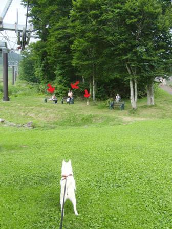 8.6たんばらラベンダーパーク3