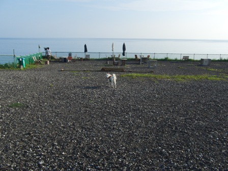 函8.29犬Cafe2