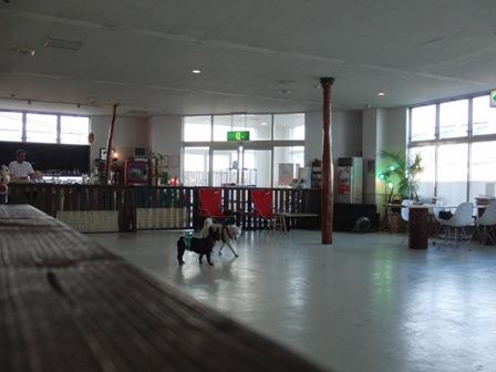 函8.29犬Cafe1