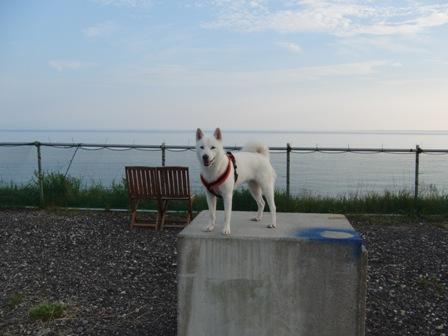 函8.29犬Cafe6