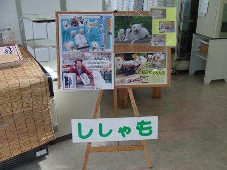 8.31大野商店1