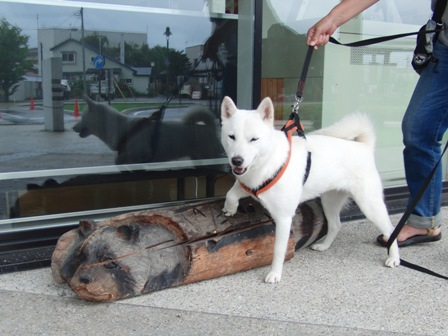 9.3木彫りの熊と