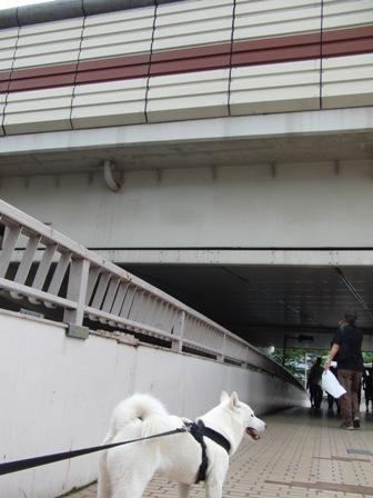 9.26歩道橋2