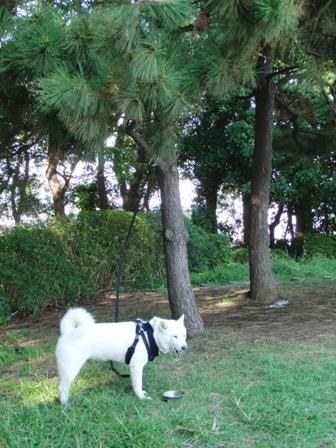 10.8京浜島つばさ公園3