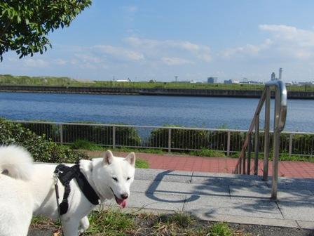 10.8京浜島つばさ公園1