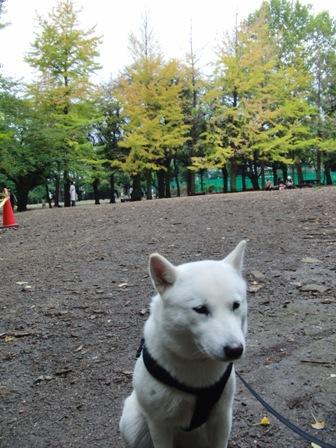 10.31公園にて3