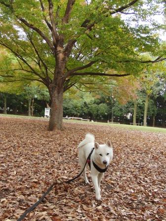 11.13芦花公園