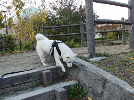 11.18芦花公園3